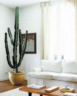 cactus12