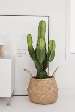 cactus15