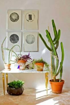 cactus23