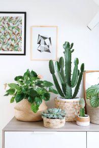 cactus29