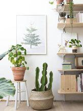 cactus32