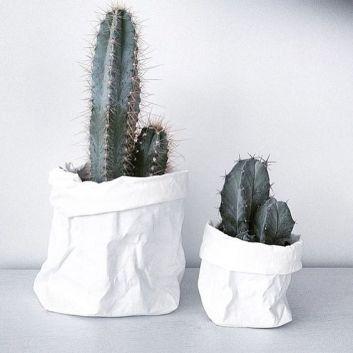 cactus35