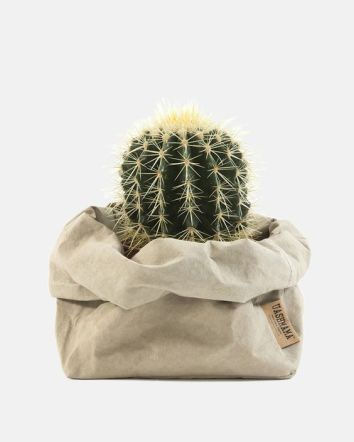 cactus38