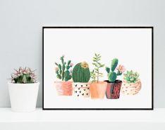 cactus40